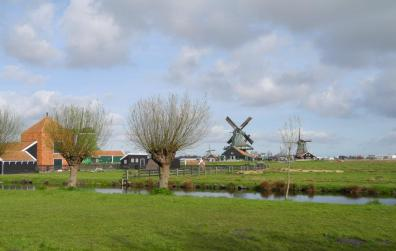 Dutch Farmland