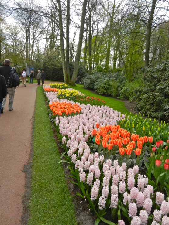 Keukenhof Gardens--the tulips are trimmed daily to keep the beds at peak performance