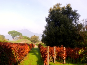 Vineyard with Mt Vesuvius in the background