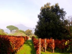 Vineyard with Mt Vesuvius in the background