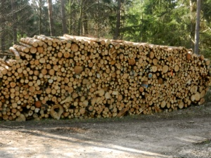 Germans and their quest for perfectly stacked wood