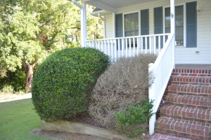 Curb appeal suffers when you think a dead shrub in the exact same size as the live shrub will do. Note to owner: it will not magically become green