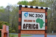 The NC Zoo is split in 2 continents--who would ever choose to visit North America is beyond us
