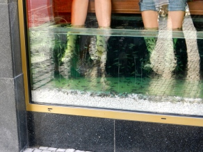 A big fad in Prague during our time in Europe: fish eating dead skin off your feet