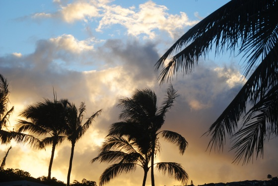 palms-in-sunset