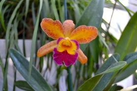 Marjorie Post loved orchids and built a fabulous greenhouse to enjoy them year round