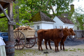 Ox and cart doing the work they were created to do