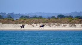 wild horses--well, not too wild